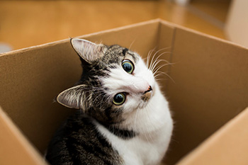 Moving with Pets - Moving Boxes